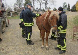 Kilpailujoukkue harjoittelemassa nostovaljaiden tekemistä hevoselle